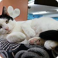 Adopt A Pet :: Kris - Salem, OH