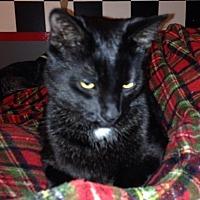 Adopt A Pet :: Prince Charles Raisin - Caro, MI