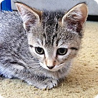 Adopt A Pet :: Aquaria - N. Billerica, MA