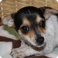 Adopt A Pet :: Mollie - Waldorf, MD