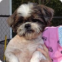 Adopt A Pet :: Leo - Crump, TN