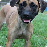 Adopt A Pet :: Remmi - Waldorf, MD
