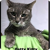 Adopt A Pet :: Fatty Kitty - Ottumwa, IA