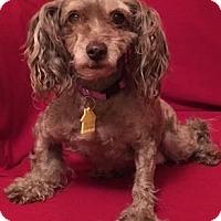 Adopt A Pet :: Bubbles - Fremont, CA