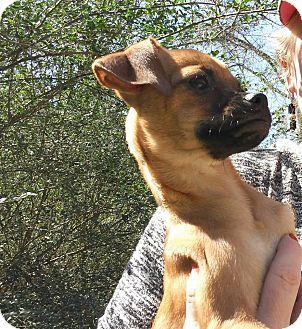 Greyhound Adoption Rhode Island