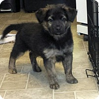 Adopt A Pet :: Rolf - Dayton, OH