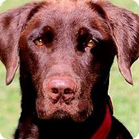 Adopt A Pet :: DRAKE(PRISON PROGRAM GRADUATE! - Wakefield, RI