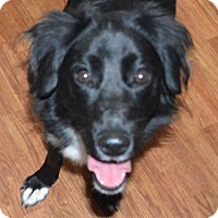 """Adopt A Pet :: Gracie""""I've Been Adopted"""" - Minerva, OH"""