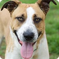 Adopt A Pet :: Petey - Homewood, AL