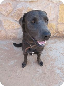 Labrador Retriever Mix Dog for adoption in El Paso, Texas - Sarge