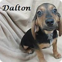 Adopt A Pet :: Dalton - Bartonsville, PA