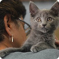 Adopt A Pet :: Petite - Reston, VA