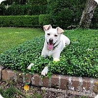 Adopt A Pet :: Cooper - Houston, TX