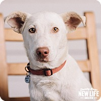 Adopt A Pet :: Corky - Portland, OR