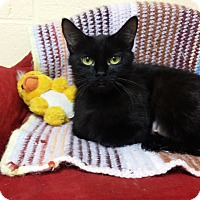 Adopt A Pet :: Alice - Berlin, CT