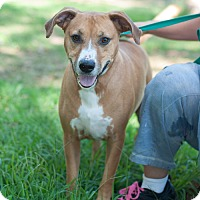 Adopt A Pet :: Duke - New Martinsville, WV