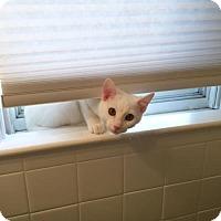 Adopt A Pet :: Jon Snow (Has Application) - Washington, DC