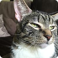 Adopt A Pet :: Nanny - Hainesville, IL
