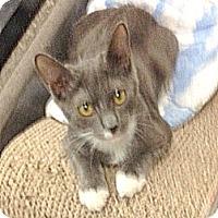 Adopt A Pet :: Madison - San Leandro, CA