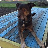 Adopt A Pet :: Carl - The Dalles, OR