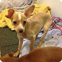 Adopt A Pet :: Paul - Winchester, CA