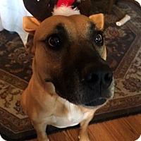 Adopt A Pet :: Edie - Santa Clarita, CA
