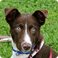Adopt A Pet :: Missy - Winters, CA