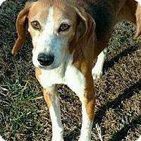 Adopt A Pet :: Lady - Lexington, MA