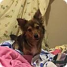 Adopt A Pet :: Amara ~Bonded: Amelie~