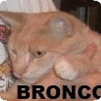 Adopt A Pet :: BRONCO - Crescent City, CA
