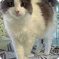 Adopt A Pet :: Katina - Miami, FL
