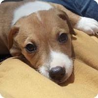 Adopt A Pet :: Baby Kilarny - Marlton, NJ