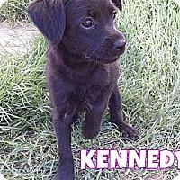 Adopt A Pet :: Kennedy - Phoenix, AZ