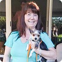 Adopt A Pet :: Tym - Sacramento, CA