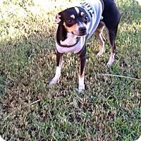 Adopt A Pet :: Alec - Phoenix, AZ