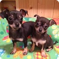 Adopt A Pet :: Bam Bam & Dino - Knoxville, TN