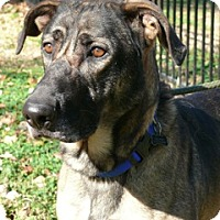 Adopt A Pet :: Rex - Nashville, TN