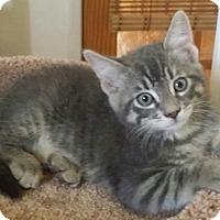 Adopt A Pet :: Obi Wan Kanobi - San Fernando Valley, CA