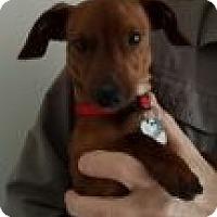 Adopt A Pet :: Gage - Decatur, GA