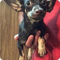 Adopt A Pet :: Peter - Dumfries, VA