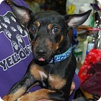 Adopt A Pet :: Kevin - Brooklyn, NY