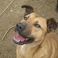 Adopt A Pet :: Patty - Albany, NY