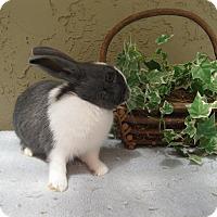Adopt A Pet :: Bria - Bonita, CA