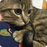 Adopt A Pet :: Rick - Leonardtown, MD