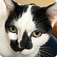 Adopt A Pet :: Buttons -- Declaw - Clayville, RI