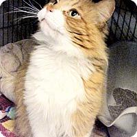 Adopt A Pet :: Bailey - Milwaukee, WI