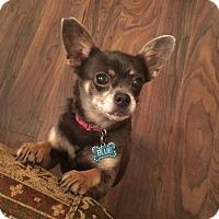 Adopt A Pet :: Blue - Boerne, TX
