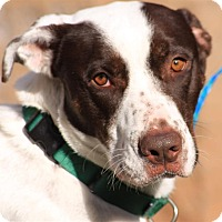 Adopt A Pet :: Allie - Sedona, AZ