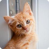 Adopt A Pet :: Rusty - Santa Rosa, CA