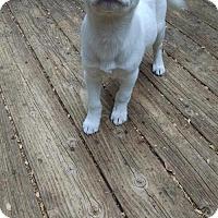 Adopt A Pet :: Kaya - Mission Viejo, CA